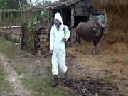 Vietnam afronta enfermedades transmitidas de animales a humanos