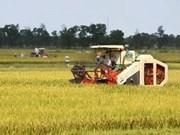 BAD apoya construir la agricultura de bajo carbono en Vietnam