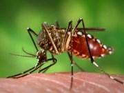 Intensifica Vietnam concienciación a población sobre lucha contra Zika