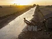 Sequía afecta el cultivo y la producción en provincia vietnamita de Dak Lak