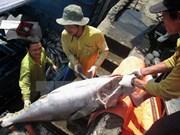 Exportación de pescado Tra vietnamita a EE.UU. no se verá afectada por nuevas normas