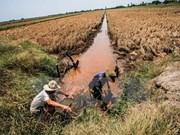 Agricultura del delta Mekong podría desaparecer por salinización