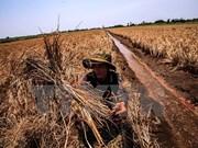 Elaboran guiones para enfrentar salinización en Delta de Mekong