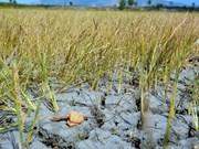 Esfuerzos en apoyo a localidades afectadas por sequía y salinización