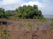 Apoyo sudcoreano a proyecto de plantación de manglares en Vietnam
