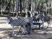 Estados Unidos respaldará a Vietnam contra comercio de animales salvajes