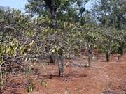 Debaten soluciones ante sequía para siembra de café en Altiplanicie Occidental.