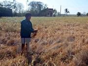 Trece provincias vietnamitas declaran situación catastrófica por sequía y salinizaci
