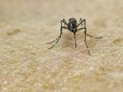 Hanoi refuerza acciones contra la penetración del virus Zika