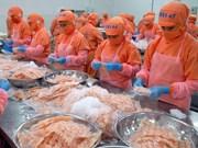 Vietnam aumenta exportación de camarones