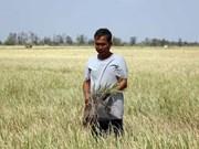 Vietnam continúa desplegando medidas contra sequía y salinización