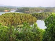 Plantación forestal brinda felicidad y prosperidad para pobladores de Yen Bai