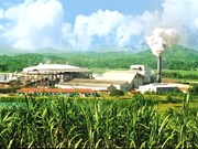 Cambodia inaugura mayor fábrica de azúcar refinado de Asia