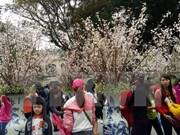 Primer festival de flor de cerezo en Dong Nai