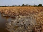 Daños económicos por sequía en provincias vietnamitas