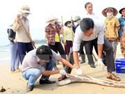 Muerte masiva de peces en costa central: Premier exige asistencia a pescadores
