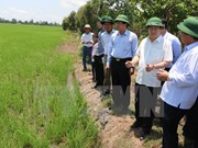 Aceleran proyecto agrícola del Banco Mundial en Vietnam