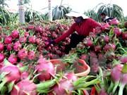 Australia considera importación de pitahaya de Vietnam
