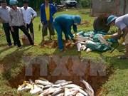 Atribuyen muerte de peces en Binh Thuan a falta de oxigeno