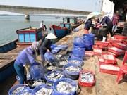 Provincia vietnamita auxilia a pescadores afectados por incidente ambiental