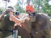 Efectúan programa de protección de elefantes en Vietnam