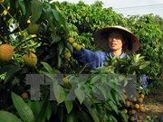 Destacan en Vietnam rol de Pymes a cadenas de suministro de alimentos