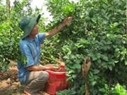 Vietnam exporta limones a Sudcorea
