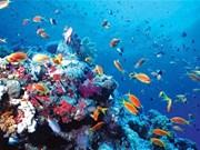 Requieren plan maestro para conservación de biodiversidad marina en Vietnam