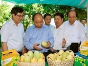 Primer ministro revisa labor de reestructuración agrícola en Dong Thap