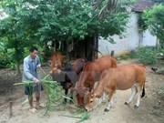 Dificultades en la modernización rural en Vietnam
