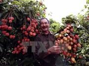 Acuerdos de libre comercio beneficiarán agricultura de Vietnam
