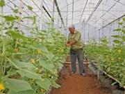 Nueva Zelanda apoya a Vietnam en producción de verduras seguras