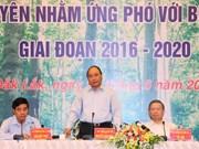 Premier urge medidas para recuperación sostenible de bosques en Tay Nguyen