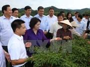 Jefa del Parlamento vietnamita orienta medidas de desarrollo en provincia norteña