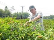 Oportunidades en exportación de ají para empresas vietnamitas