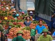Divulgan compromisos de protección de indicaciones geográficas entre Vietnam y UE