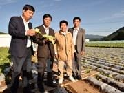 Vietnam adquiere experiencias agrícolas de Japón