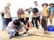 Residentes de Quang Binh aspiran a entorno marino limpio