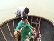 Respalda Thua Thien- Hue a pescadores en estabilización de vida