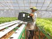 Provincia norvietnamita exhorta inversiones japonesas en agricultura moderna