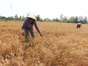 Cambio climático, gran reto para desarrollo sostenible de Delta de río Mekong