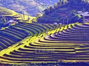 Año Nacional de Turismo de Vietnam se celebrará en provincia de Lao Cai
