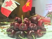 Promueve Canadá exportaciones de cereza en Vietnam
