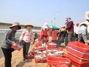 Vietnam e Indonesia impulsan cooperación en el sector pesquero