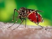Aumentan casos de dengue en Altiplanicie Occidental de Vietnam