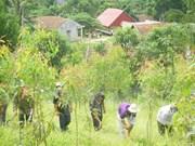Empresa vietnamita recibe certificación de gestión sostenible de bosques