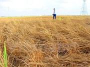 UNICEF proporciona asistencia por sequía en Vietnam