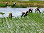 Provincia de KonTum aboga por reestructuración agrícola para el desarrollo