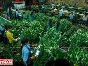 Da Lat, reino de hortalizas y flores