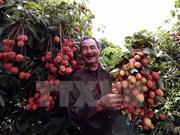 Abrir entrada de frutas en mercado australiano, éxito de negociadores vietnamitas